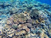 Korallrev av kusten av Gee ?n i den Ouvea lagun, lojalitet?ar, Nya Kaledonien royaltyfri fotografi