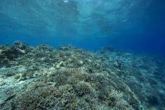 Korallrev i det tropiska havet Arkivfoto