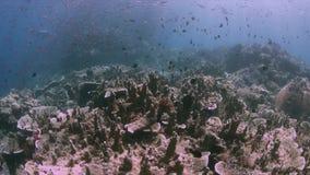 Korallrev i Raja Ampat, Indonesien 4k arkivfilmer