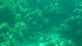 Korallrev med exotiska fiskar, ultrarapid lager videofilmer