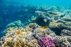 Korallrev med fiskar Arkivbild