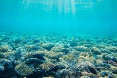 Korallrev med fiskar Arkivfoto