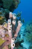 Korallrev med havssvampen Royaltyfri Foto
