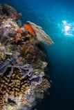 Korallrev med sunburst Arkivbilder