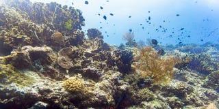 Korallrev och fisk i det undervattens- tropiska havet Royaltyfria Foton