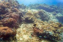 Korallrev och fisk i det undervattens- tropiska havet Arkivfoton