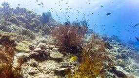 Korallrev och fisk i det undervattens- tropiska havet Arkivbild
