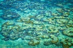 Korallrev och kristallklart vatten på den tropiska stranden royaltyfria foton