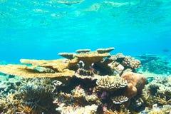Korallrev på Maldiverna Arkivfoton