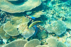 Korallrev på Maldiverna Royaltyfri Bild