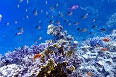 Korallrev på underkanten av det röda havet med hard, fi Arkivfoton