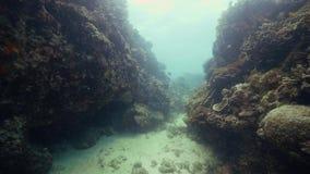Korallrev på undervattens- sikt för havsbotten Skjuta medan djup dykning i havvatten Undervattens- värld, korallrev och lager videofilmer