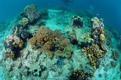 Korallrev som är undervattens- i Sipadan Arkivfoto