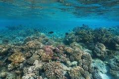 Korallrev under havsStilla havet arkivbild