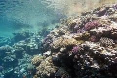 Korallrev under yttersidan av vatten i det tropiska havet som är undervattens- Royaltyfria Bilder