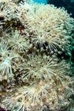 korallrevar Royaltyfria Bilder