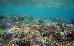 Korallrever Fotografering för Bildbyråer