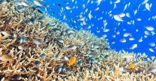 Korallrevpanorama Arkivbilder