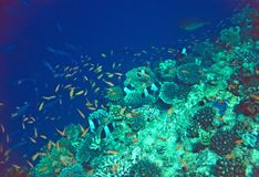 korallrevplats Arkivbild