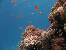 korallrevplats Arkivbilder