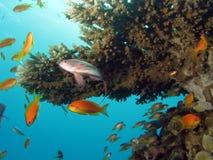 korallrevplats Arkivfoton