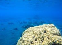 Korallseaworld i tropisk kust Undersea landskapfoto Faunor och flora av den tropiska kusten Royaltyfri Foto