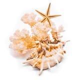 korallsjöstjärnawhite Royaltyfria Foton