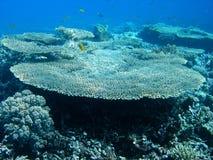 koralltabell Arkivbild