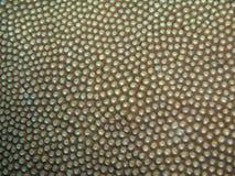 Koralltextur royaltyfri foto
