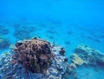 Koralltillväxt i tropisk kust Undersea landskapfoto Faunor och flora av den tropiska kusten Royaltyfria Foton