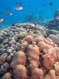 Korallträdgård i karibiskt arkivbilder