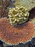korallträdgårdar Arkivfoton