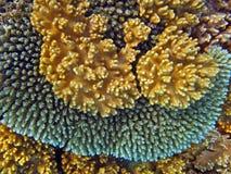 korallträdgårdar Arkivfoto