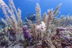 Koralltr?dg?rd i karibiskt arkivbilder