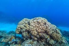 Korallträdgård Royaltyfri Fotografi