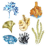 Koralluppsättning Akvariumbegrepp för tatueringkonst eller t-skjorta design som isoleras på vit bakgrund arkivfoto