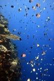 korallverticalvägg arkivbild