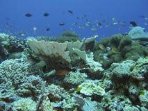 koralowa formacja Fotografia Royalty Free
