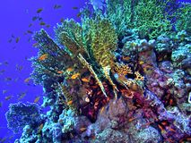 koralowa hdr rafy wersja Fotografia Stock