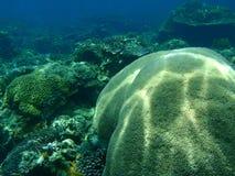 koralowa miękka część Obrazy Stock