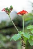 Koralowa roślina Obrazy Stock