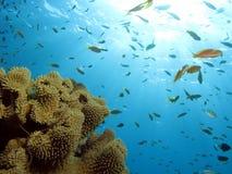 koralowa scena Zdjęcie Royalty Free