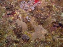 Koralowa tekstura na statku wraku obraz royalty free