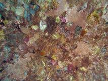 Koralowa tekstura na statku wraku fotografia royalty free