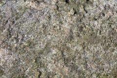Koralowa tekstura w popołudniowym słońcu Obrazy Stock