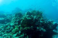 koralowe ryba refują tropikalnego _ Fotografia Stock