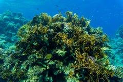 koralowe ryba refują tropikalnego _ Obraz Royalty Free