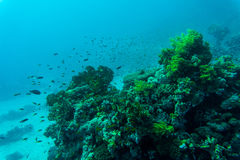 koralowe ryba refują tropikalnego _ Zdjęcia Royalty Free