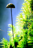 Koralowego grzyba pozaziemski dziwaczny przedmiot Obraz Royalty Free