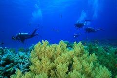 koralowi nurkowie badają rafowego akwalung Obrazy Royalty Free